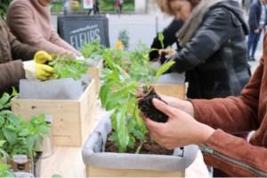 femme jardinage sur balcon, main dans la terre, boutique pompon Montreuil