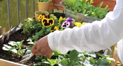 jardinage sur balcon chemise blanche