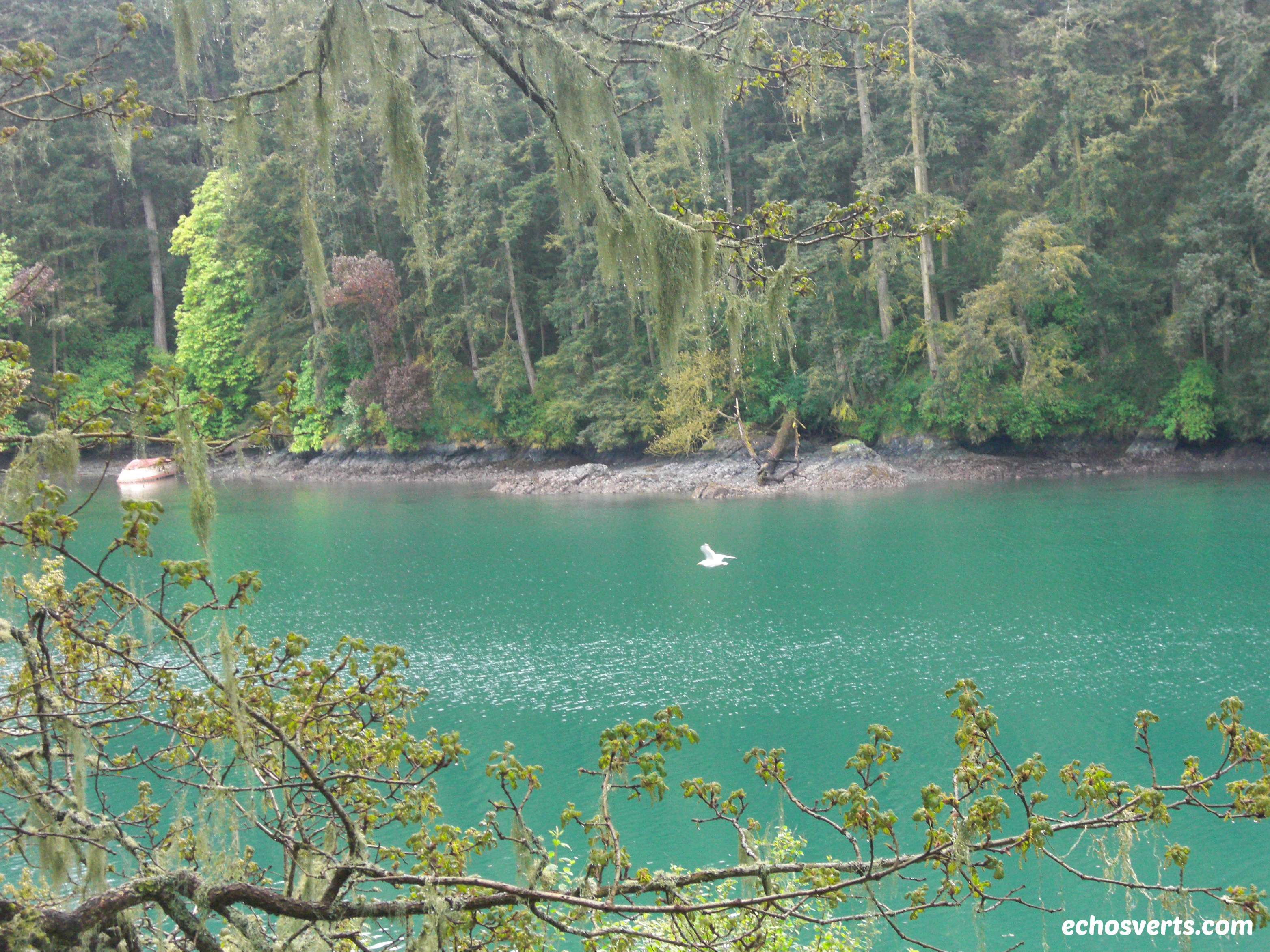 Pedder Bay- Vancouver Island- copyright- échos verts