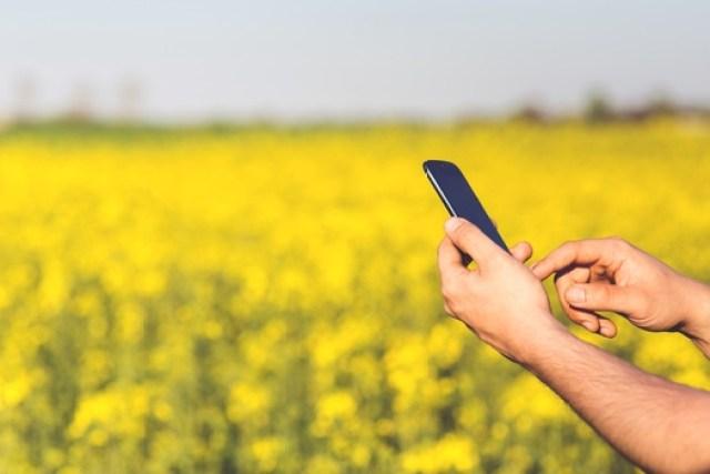 man-field-smartphone-yellow-medium