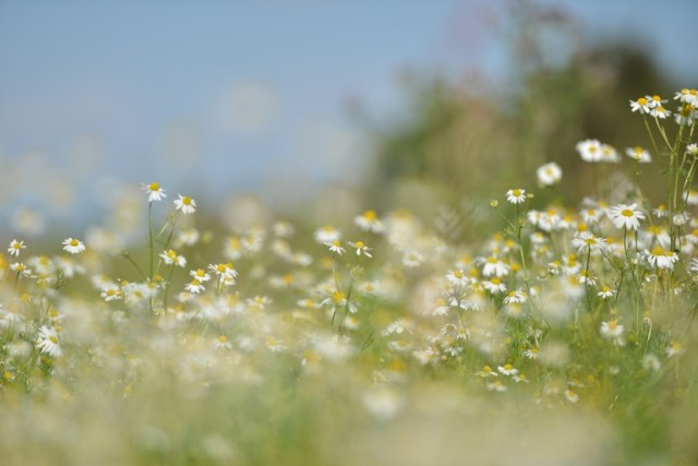 nature-field-flowers-grass-large