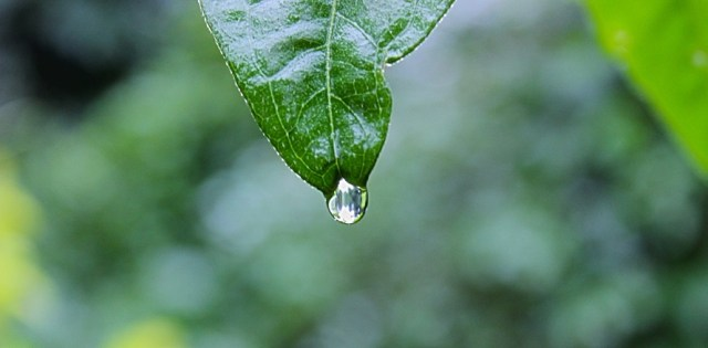 nature-plant-leaf-rain-large