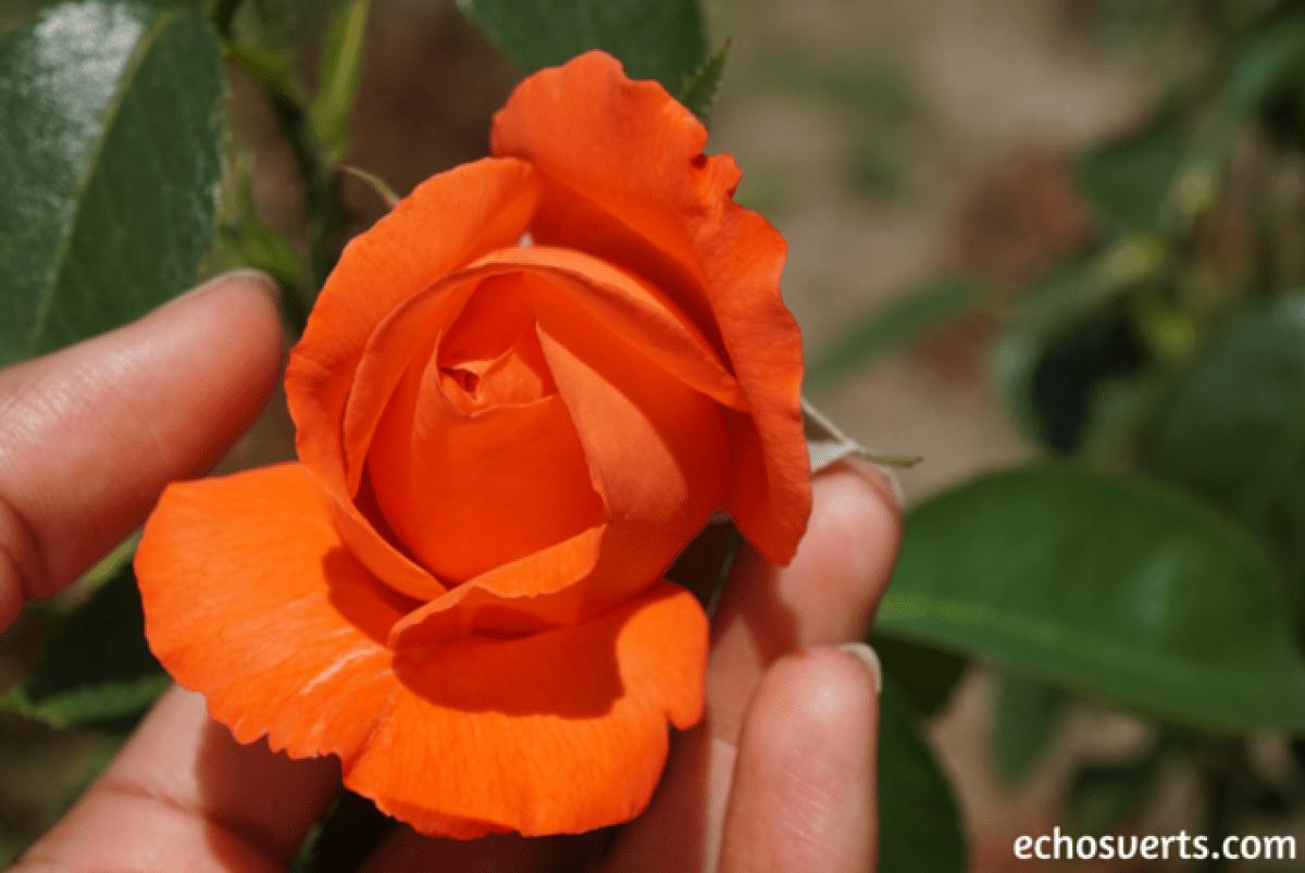 Ecologie de soi respect du corps echosverts.com
