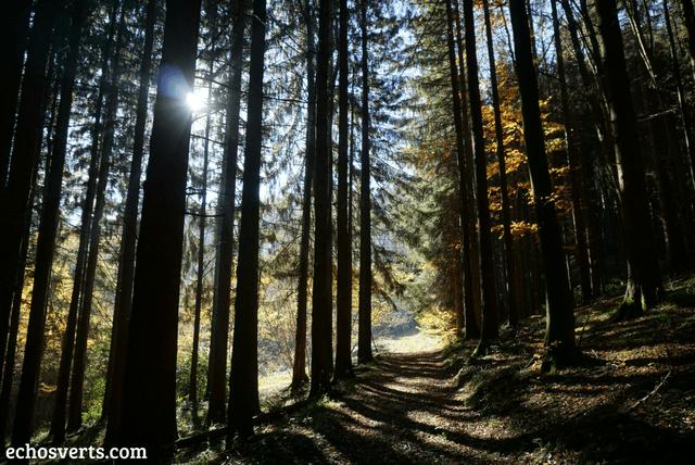Forêt noire Freiburg Allemagne echosverts.com