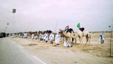 صورة موريتانيا.. 1000 جمل تحمل الأعلام العربية