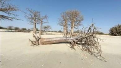 صورة التغيّر المناخي يهدّد أكثر من مئة مليون شخص في إفريفيا