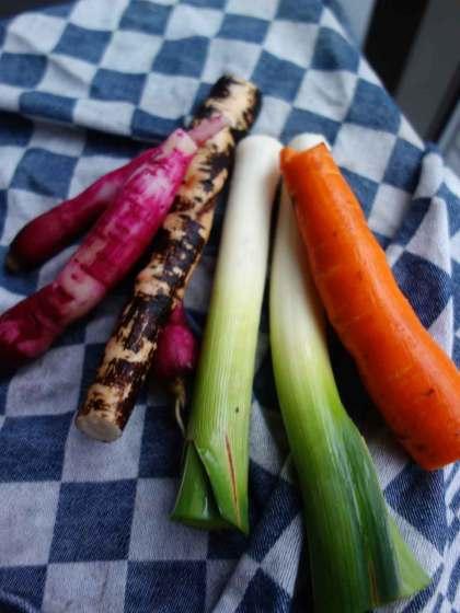 Rode ramenas schorseneer radijs prei wortel in de oven