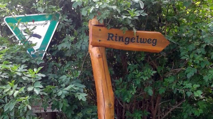 Ringelweg_Oderwald