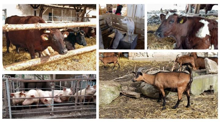 Tiere auf dem Klostergut Heiningen