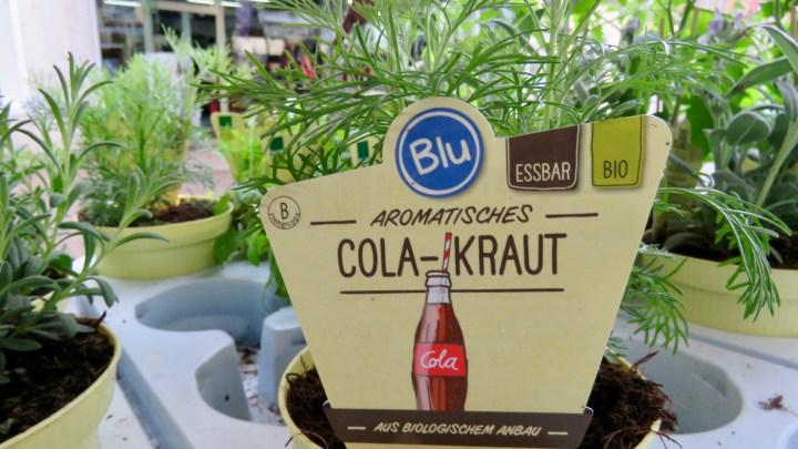 Bei Blütenzauber gibt es besondere Kräuter, wie zum Beispiel das Cola-Kraut.