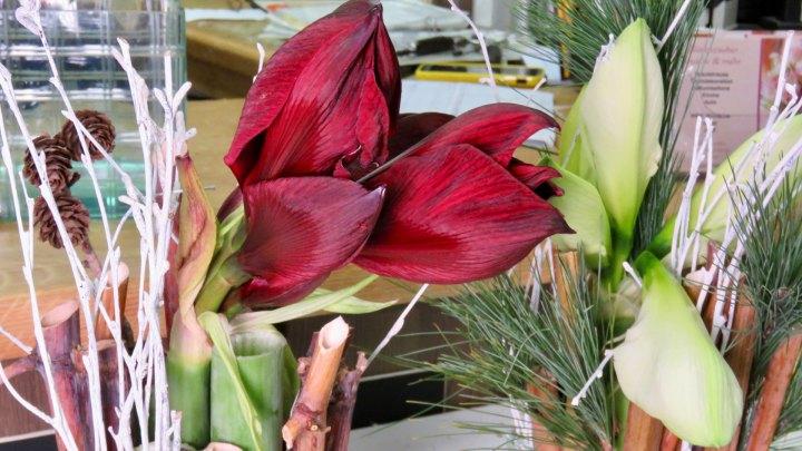 Zwei tolle Amarillys-Gestecke werden bei Blütenzauber gezaubert.
