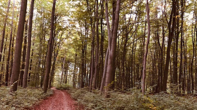 Fitness-Spaziergang im Lechlumer Holz.
