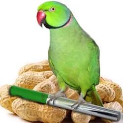 Percy the Parrot horoscopes