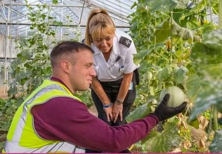 Prisoner in garden at Guernsey Prison