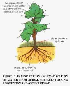 transportation of water