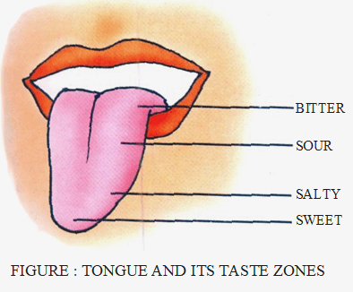 Tongue and its test