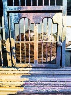 imperial-pagoda-display-cabinet-curio-cabinet-bookshelf-eclatdesignsbycrystin-7