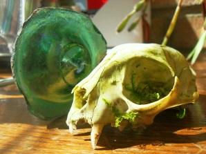 cat skull and bottle bottom