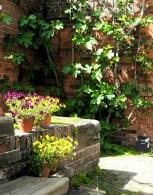 fig tree in sunny corner