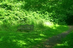 Bourne Woods - Lanbeach