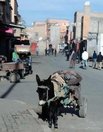 donkey cart 2