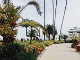 Orange, Flowers, Landscape, Palms, Avalon, Catalina Island, Beauty, Nature, Resort,