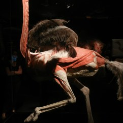 Ostrich Skeleton Diagram House Wiring Software 1000 43 Images About Animal Aantomy On Pinterest Search