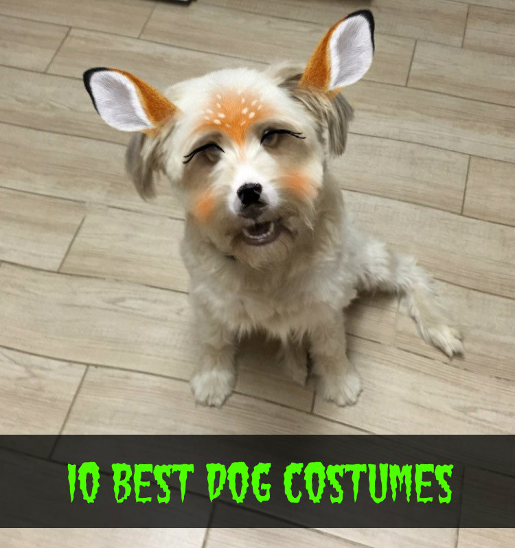 (1) Winnie the Pooh. Oh my gosh this baby is so adorable and looks just like Pooh when he has eaten too much honey! This Winnie the Pooh Dog Costume ... & 10 Best Dog Costumes