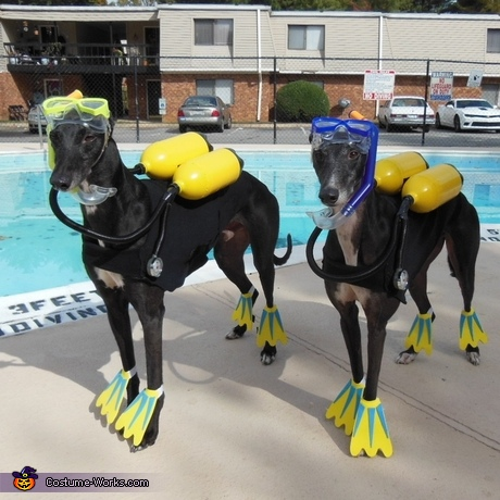 scuba-diver-dog-costumes