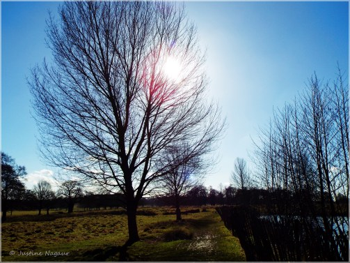 Monthly Photo Challenge: The Changing Seasons 02