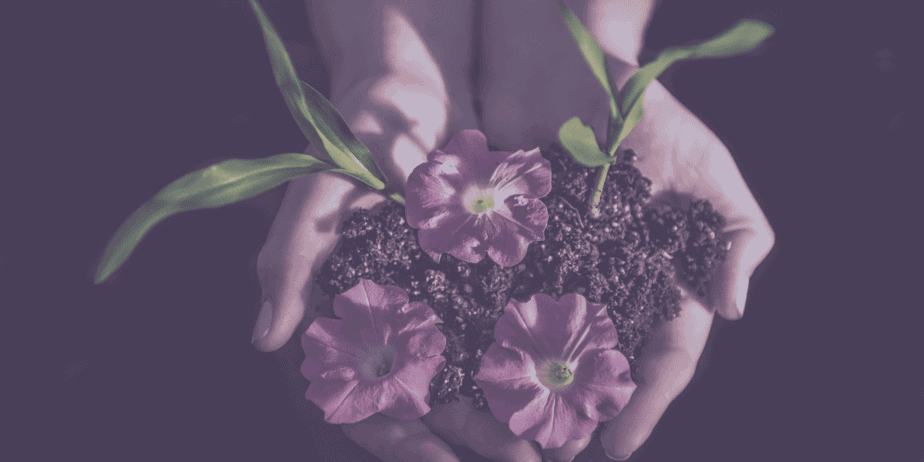 Hands holding beautiful purple flowers, a pile of healthy soil, and two stems and leaves on a black background