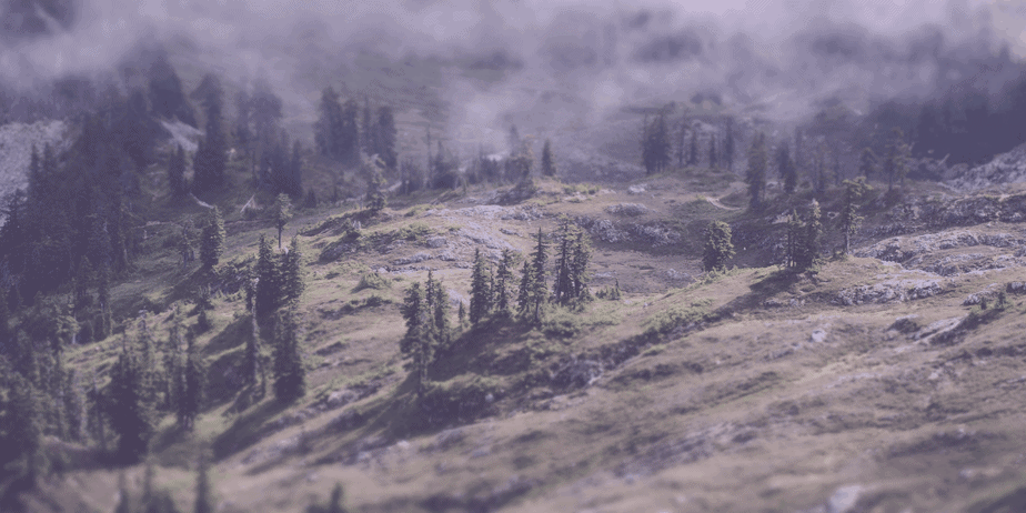 A landscape shot of a foggy, sparse forest with evergreen trees and rocky hills on a mountainside