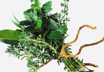 Learn Herbalism: The 10 Best Herbalist Books