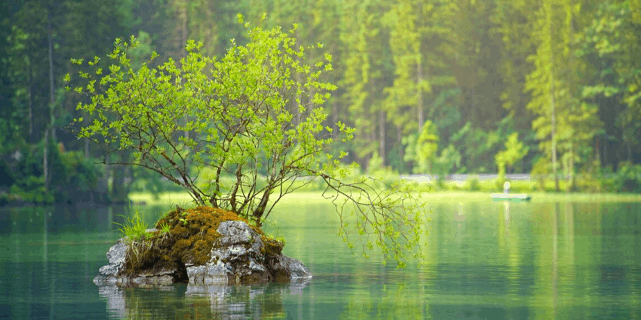 An island with a shrub hanging over a beautiful green lake with a forest in the background