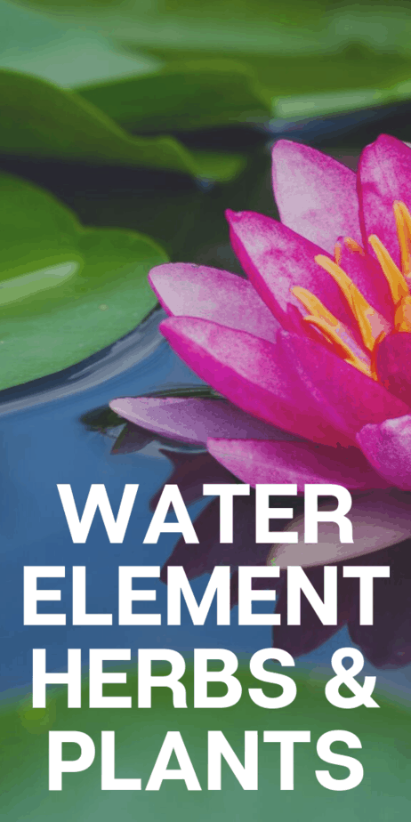Aloe plants, catnip, lotus flowers, and lilies have something in common: They're all plants associated with the water element. Learn magical herbsliam with this long list of water element plants to use in your witch spells that work. #witch #witchcrat #pagan #wicca #herbalism #occult #plants
