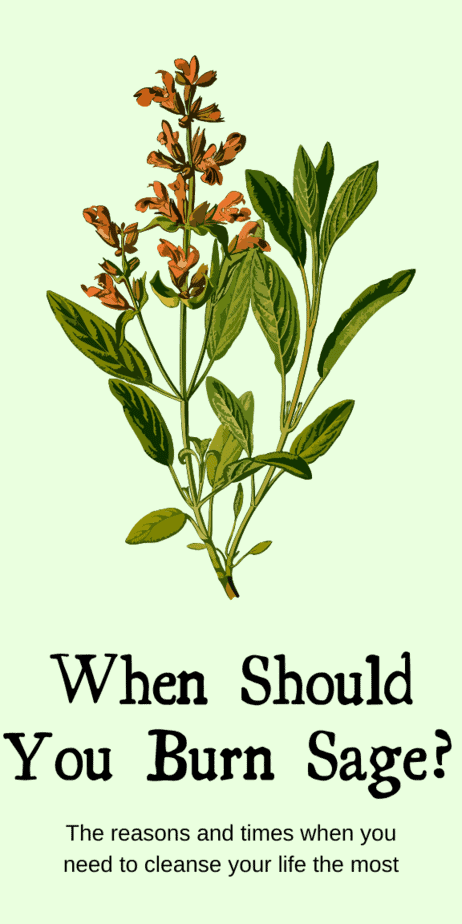 When should you burn sage? The reasons and times when you need to cleanse your life the most. Not all herbal smoke cleansing is smudging, which is specifically about the Native American practice. Smoke cleansing with sage has been seen in many cultures and in modern witchcraft. #sage #smudging #witch #witchcraft #pagan #wicca #occult