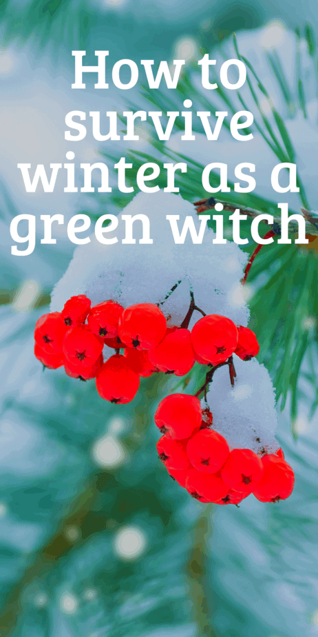 How to survive winter as a green witch. Yule gift ideas, gardening tips for winter, green witchcraft when it's snowy outside. How to be surrounded by real plants even in the dead of winter. #yule #witch #greenwitch #witchcraft #christmas #pagan #paganism #wicca #garden #gardening #wreaths #christmastree #yuletree #poinsettia #herbaltea