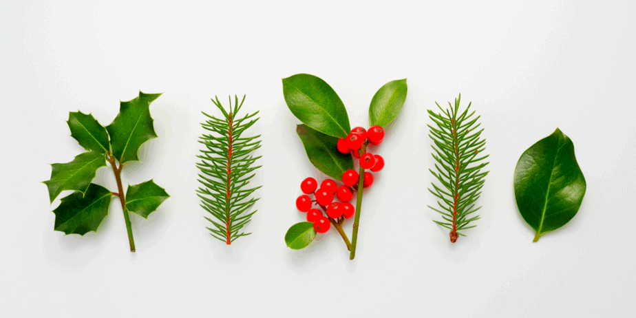 Different plants that are sacred during Yule