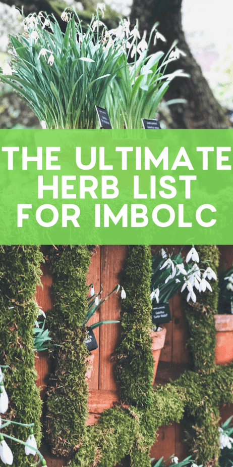 The Ultimate Guide to Imbolc Altar Decor. Find the flowers, herbs, symbols, and crafts that you should place on your altar for the pagan holiday Imbolc. Celebrate Brigid and the rebirth of the God of the Sun with this witch Sabbat in February! Imbolc incense. Imbolc doll. Imbolc candles. Celebrating Imbolc history. Imbolc Wiccan. Imbolc cross. Imbolc witch. Imbolc DIY. Imbolc book of shadows. #imbolc #candlemas #pagan #wiccan #paganism #wicca #witch #sabbat #wheeloftheyear #holiday #occult