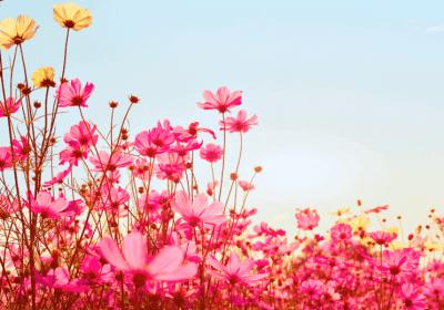 Drying Herbs For Herbal Magick: 3 Simple Magical Methods
