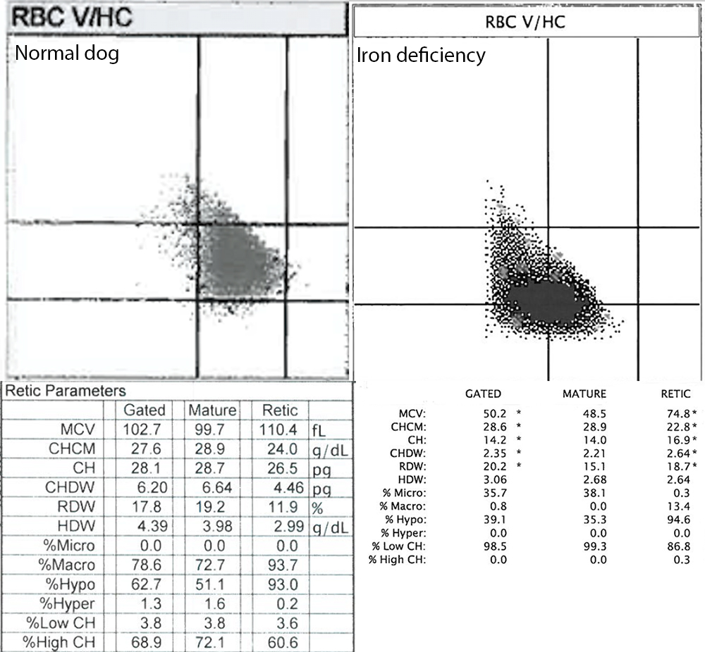 ADVIA reticulocyte indices in a clinically healthy dog and