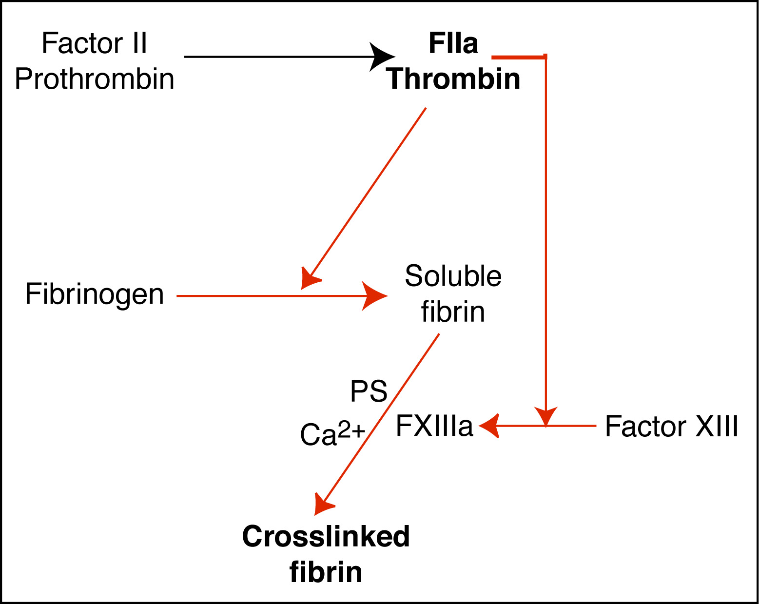 Formation Of Fibrin