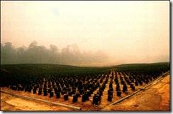 palmoilplantation