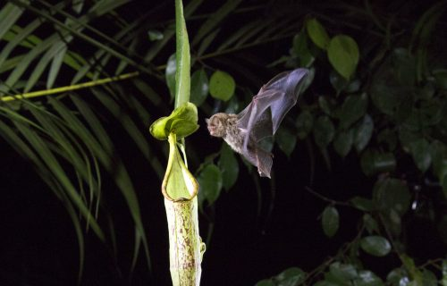 Birds of Paradise Video: Our Planet!