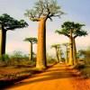 Obrączkowe zaćmienie Słońca – Madagaskar 2016