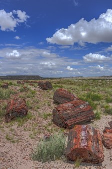 Petrified Forest 001