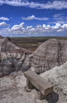 Petrified Forest 005