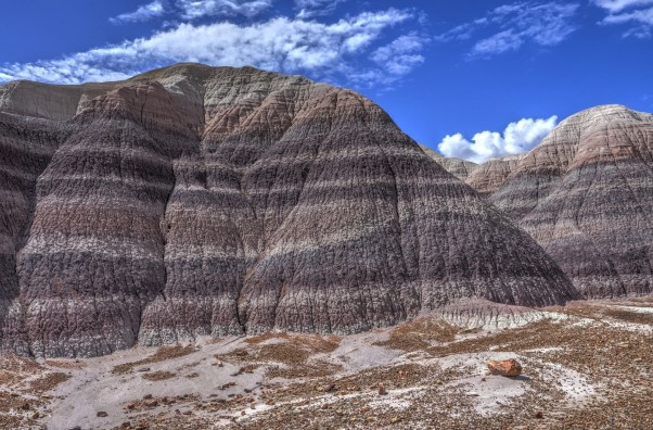 Petrified Forest 008