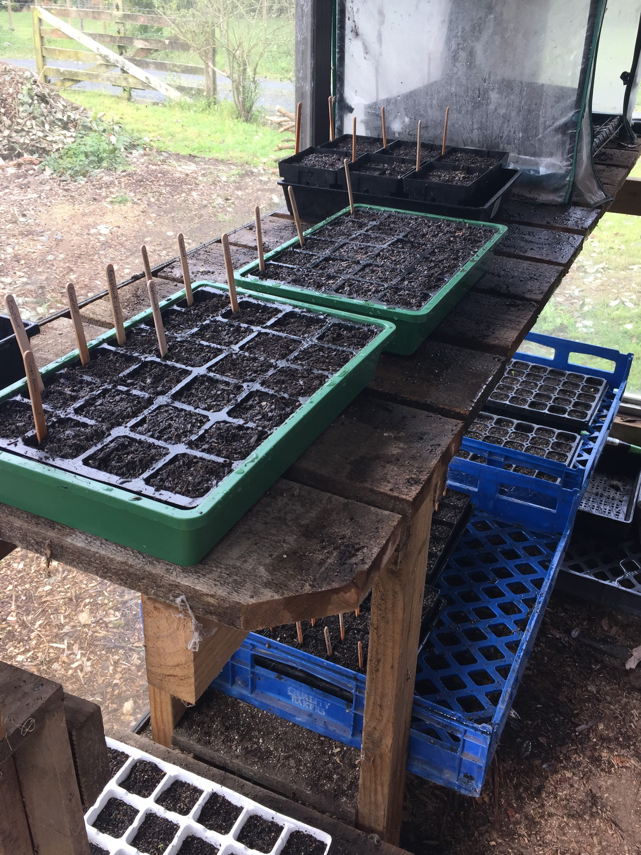 How to grow vegetables from seed