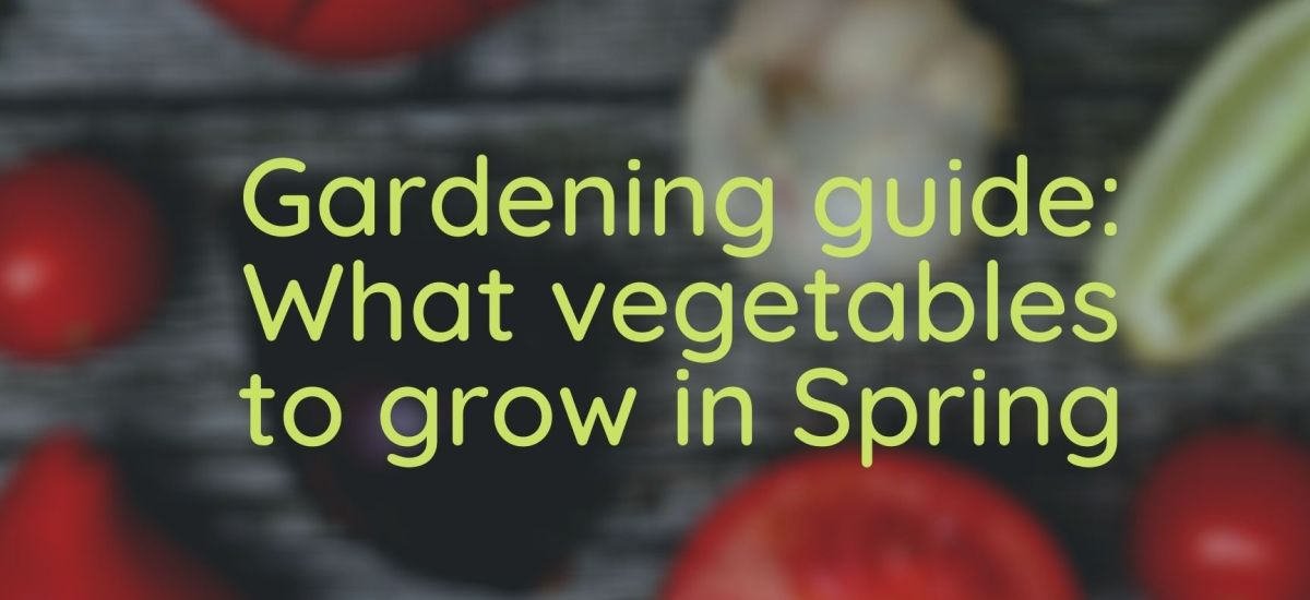 Gardening guide: What vegetables to grow in Spring
